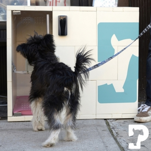 "Dog Parker - a service that allows you to ""park"" your dog when you go shopping, etc. Climate controlled for comfort. An alternative to tying your dog to a tree with the possibility of getting dognapped."