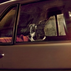 "Beautiful exhibition ""Dogs in Cars"" by Martin Usborne."