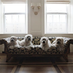 Pampered pooches and the trouble they cause. Great NYtimes slideshow.