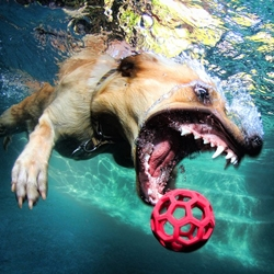 Fantastic underwater dog photography by Seth Casteel.