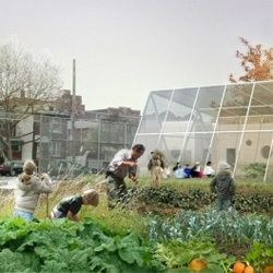 New York's Public School 216 to get an edible school yard thanks to Work AC.