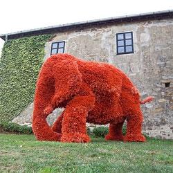 Elefante Naranja by Javier Requejo.