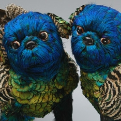 Emily Valentine's otherworldly feathered dogs.  The artist uses the feathers of the Indian Mynah bird, a registered pest, to create these amazing animals.