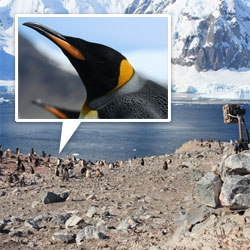 NOTCOT Supports: Penguin SatCam project... we just adopted a colony of penguins in Antartica. Check out this amazing penguin research project and join us in helping make it happen!