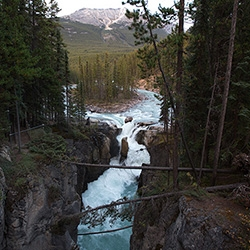 Sunwapta Falls in Jasper National Park, Alberta, Canada. That glacier blue water rushes down with such force around the island, down the drop off, and around the bend. See tiny Shawn + Bucky for scale! Also amazing tree roots!