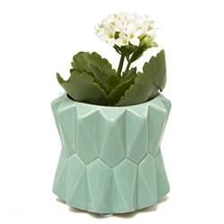 Fang Planters from Chive