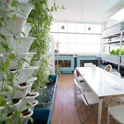 Dalston's FARM:shop is literally a farm in a shop. Once a derelict store, it is now a shop/cafe/meeting place and farm all in one, complete with a backyard polytunnel, aquaria, hydroponics, and rooftop living chickens!