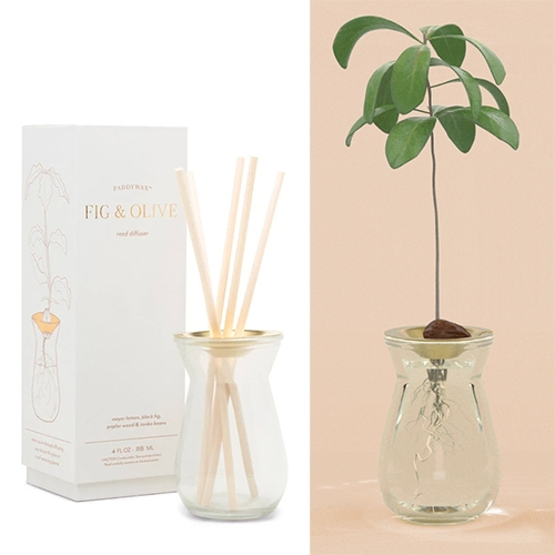 Paddywax Flora Collection of Diffusers have glass vessels with a brushed gold metal plate that turns into the perfect bulb/seed vase! (My avocado seed would be perfect in this!) They always have such lovely simple designs with gift worthy packaging.