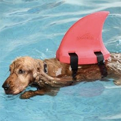 Swimfin - interesting floatation device to help teach kids (and dogs?) to swim!