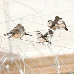 Céleste Boursier-Mougenot's From Here to Ear (v. 13) at the Queensland Gallery of Modern Art features finches and coat hangers.