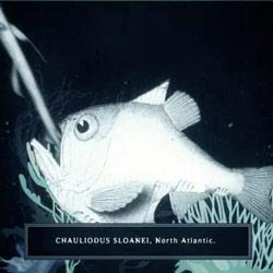 Adam Gault's Lantern Fish short film is breathtakingly creepy yet mesmerizing