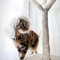 Yes, it's real. Stylish wigs, kitty-sized, to give you more reasons to take photos of your beloved.