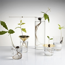 Studio Michael Anastassiades Floating Forest Series - polished brass pieces you can combine with any glass for minimal planters