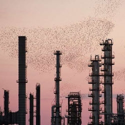 Massimo Crisaldi's photos of birds flocking over a refinery at sunset (they're attracted to the warmth) are so beautiful.