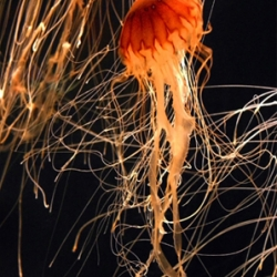 Stunning jellyfish photography by Barry Steven Greff.