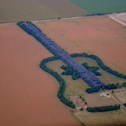 A forest in General Levalle, Argentina in the shape of a guitar began in 1977as a tribute to his late wife by farmer Pedro Martin Ureta.