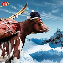 SMFB created a great series of ads for Freia. Using cows to showcase Freia's latest product, milk-chocolate with bits of Kvikk Lunsj.  Kvikk Lunsj is very popular in Norway especially among skiers and hikers.
