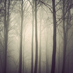 "From Danish photographer Kim Høltermand's series ""The Trees."" A forest in fog shot an early morning."