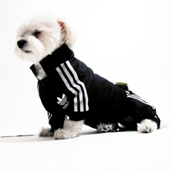 Luxirare makes a mini adidas tracksuit for their dog, Rocky.