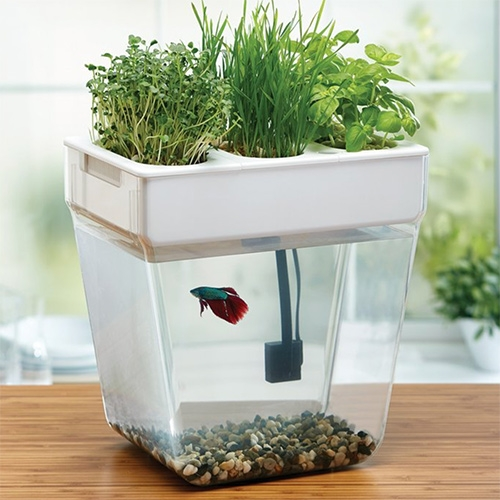 Back To The Roots Water Garden - a self-cleaning fish tank that grows organic sprouts and herbs. In this low-maintenance, mini aquaponics ecosystem, the fish feed the plants and plants clean the water.