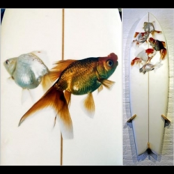 Dirk Westphal has elevated the status of the goldfish from pet to creature worthy of worship by putting its photo on, of all things, surfboards