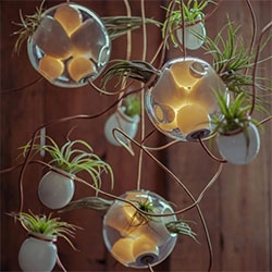 Bocci #38 ~ beautiful mixture of blown glass, lighting, and air plants to create fantastic sculptural lighting.