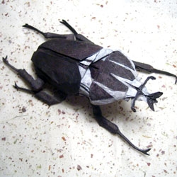 Engineer Brian Chan creates some extremely complex and beautiful pieces of origami, including this Goliath beetle.