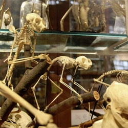 On more zoological inspiration… here's an up close look at the newly reopened Grant Museum of Zoology.