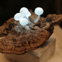 LED mushroom lights are sprouting from reclaimed wood.