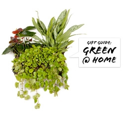 NOTCOT Holiday Gift Guide ~ Going GREEN! Literally! All about gorgeous ways to integrate plants at home....