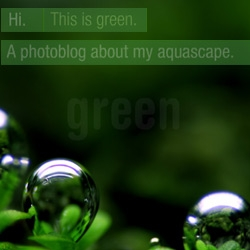 Marcus Wallinder's favorite color is green. He owns a Canon 350D and a 100mm f2.8 macro usm lens. This is his photoblog