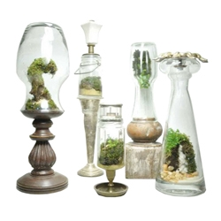 Repurposed bottle terrariums by Jose Agatep. Glass containers of various shapes transformed into incredible terrariums filled with locally grown plants, wild mosses, stones, soil, and wood chips collected from nearby forests and train tracks.