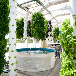 TheCoolist visits the Farm of the Future: Green Sky Growers, a high-tech, software-driven living ecosystem just outside of Orlando, FL.