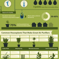 This is an infographic that helps you understand the health benefits of having plants in your home or office.  Lower your stress, blood pressure while being more productive, simply by owning plants.
