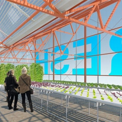 "The Greenhouse Project in Brooklyn, a conceptual ""pop-up farm"" to be built in Cypress Hills as part of 2011 DesignNYC round of nonprofit and design collaborations.."