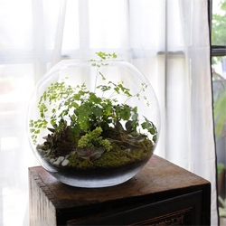 Paris-based grow little terrariums.