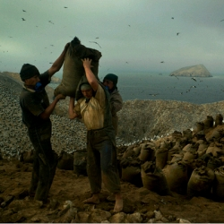 it may be poop, but guano is big business in peru.