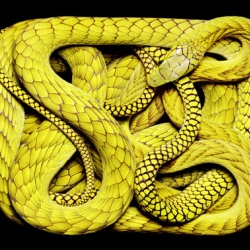 Amazing photos of coiled snakes by Paris-based photographer Guido Mocafico, whose work has appeared in Numèro, Paris Vogue, Big, The Face, and Wallpaper.
