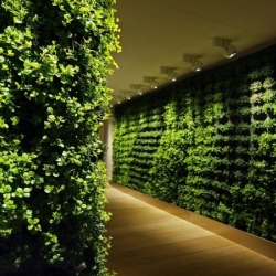 Customized green walls for fresh interiors by Greenworks Studio.