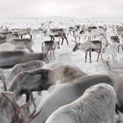 American photographer Erika Larsen spent three years living mostly with reindeer herders in Kautokeino, Norway's far north.