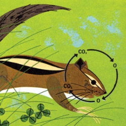 A gallery of beautiful biology illustrations by Charlie Harper from a book published in 1961.