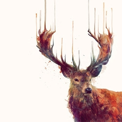 Beautiful natural illustration from Amy Hamilton