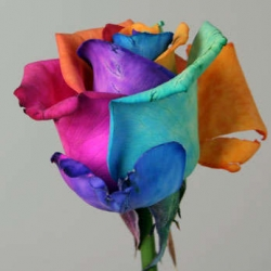 "Unique amazing ""Happy-Roses""!!!
