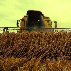 Golden Harvest, beautiful film capturing the harvest season.
