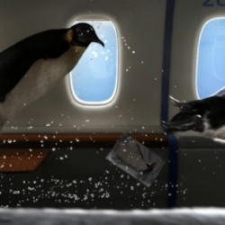 Penguins in Heaven : beautiful 3D animation made by Federico Costa for Delapostparis.