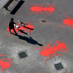 About 500 red ants are spread in the city of Drachten, The Netherlands. Most of them came together in front of the theatre De Lawei, to celebrate its 50th anniversary.