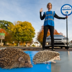 Sonic the Hedgehog helps his fellow spiky friends by creating a dedicated hedgehog road crossing to celebrate the launch of new game Sonic Colours.