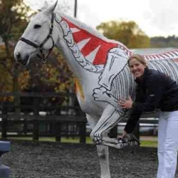 Equine health lectures that uses real 'painted' horses as live anatomical text books