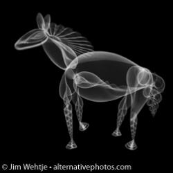 Seashell x-ray photos arranged to make animals from Jim Wehtje.