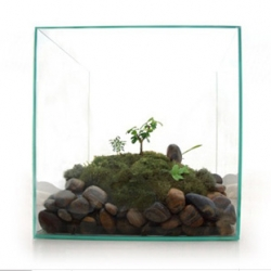 Lovely (and affordable) modern terrariums from JeffreyJamesModern.